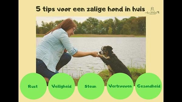 5 tips voor een zalige hond