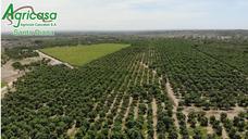 Agricasa   Uva