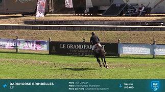 Darkhorse Brimbelles Fontainebleau Final 5 ans 2018