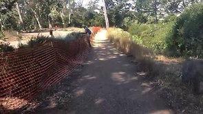 Spreading Blue Wild Rye in Golden Gate Park