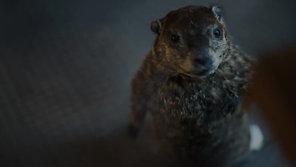 Groundhog  Indeed US