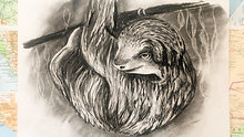 charcoal drawing - sloth