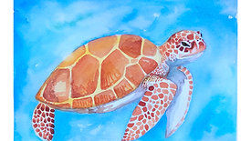 Painting a turtle in watercolour
