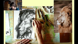 Charcoal Drawing - lion