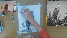 heron charcoal drawing time lapse