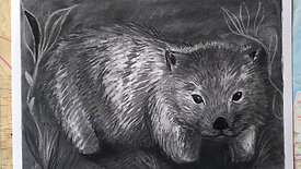Charcoal Drawing - wombat