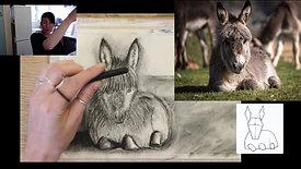 donkey charcoal