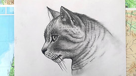 Charcoal Drawing - cat