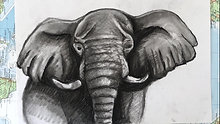 Charcoal Drawing - elephant