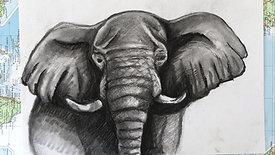 Charcoal Drawing - elephant