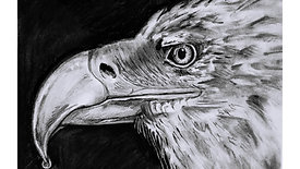 Charcoal drawing of an eagle