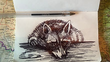 Drawing with Pen Only - Raccoon
