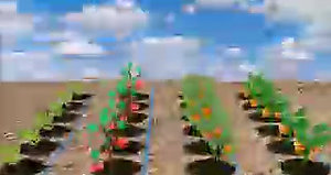 Agri sensors