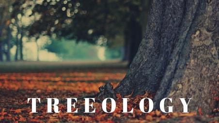 TREEOLOGY