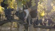 Corporate Voiceover - Organic Farm, Tuscany
