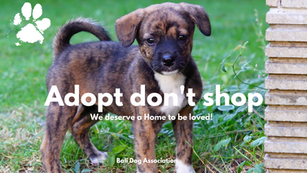 """Why Everyone Should """" #adoptdontshop """" - Bali Dog Association"""