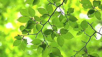 Whisper Green Bluthner