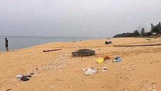 Green Turtle, Plastic Malaysia