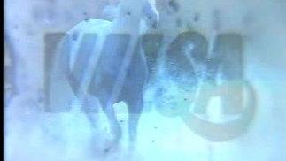 """Vilsa """"Pferd"""""""