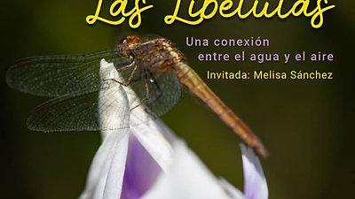 Las libélulas: Una conexión entre el agua y el aire.