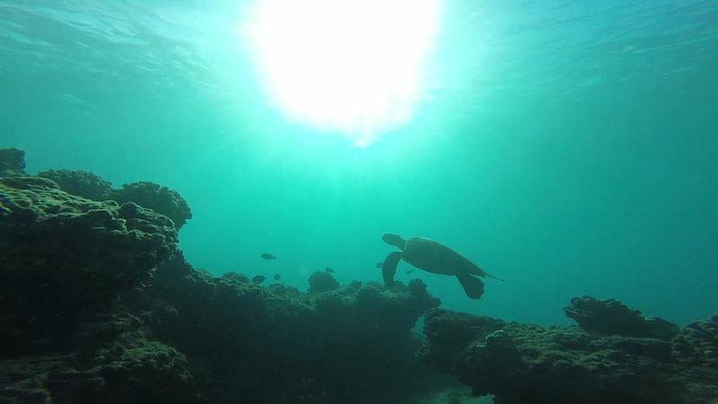 Destination Diving Maui
