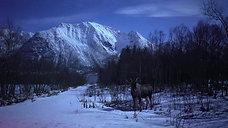 Moose safari at night