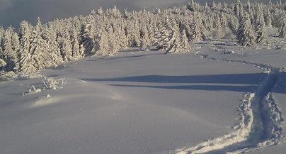 Balade dans la neige...