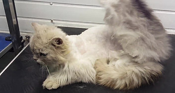 Matted Cat