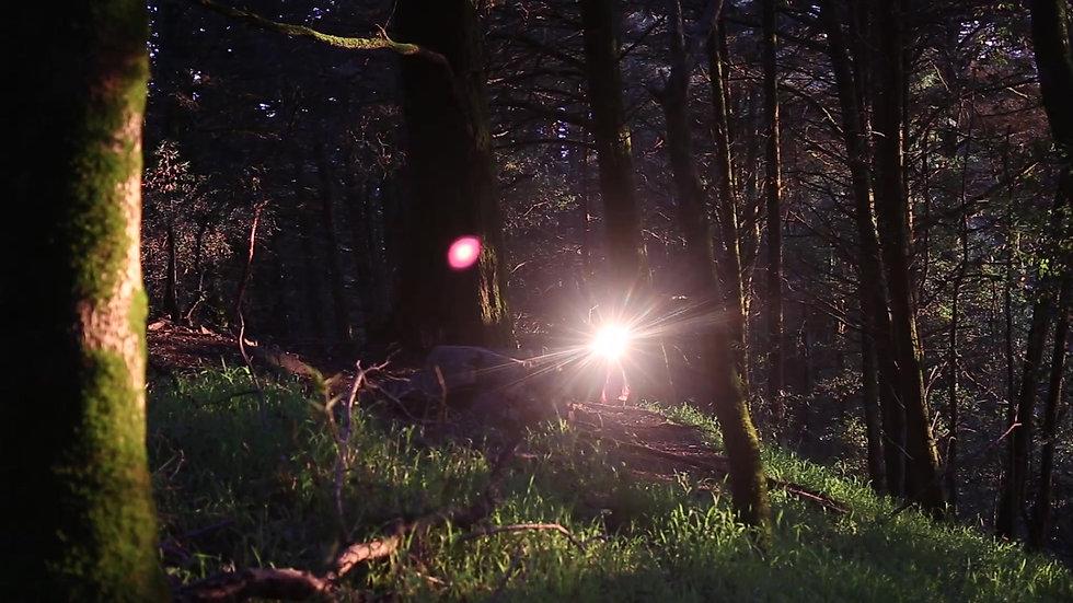 three tree reflection