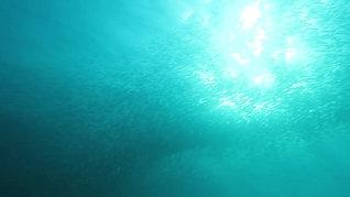 Sardine Storm at Kontiki House Reef 沙丁风暴