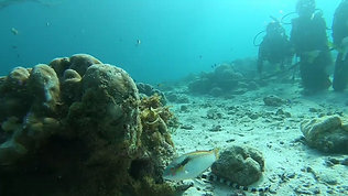 Sea Snake Interruption 海蛇倒断课程