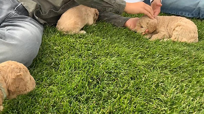 First Time on Grass