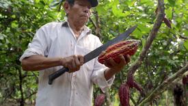 Origins of the Cacao Bean (Teaser)