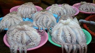 Shelling an Octopus (TongYeong Fish Market 2017)
