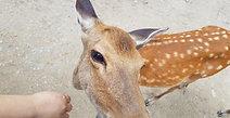Taking Selfie w a Deer