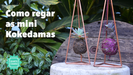 Como Regar - Mini-Kokedamas