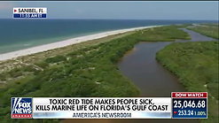 Red tide disrupts tourism along Floridas Gulf Coast  Fox News Video
