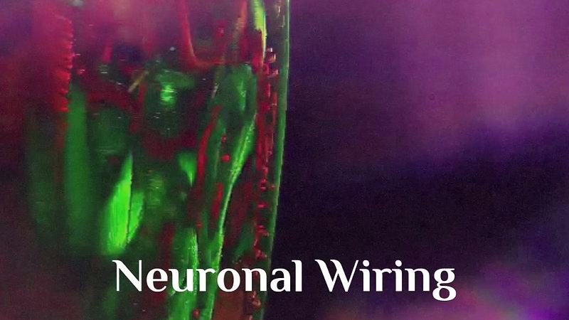 Neuronal Morphogenesis