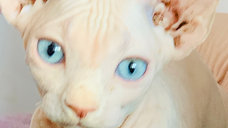 Pink Bambino Yeux Bleu