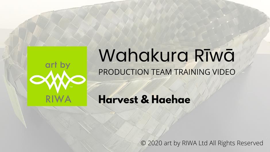 1. Harvest & Haehae - Wahakura Rīwā
