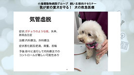 我が家の愛犬を守る!犬の救急医療セミナー part4