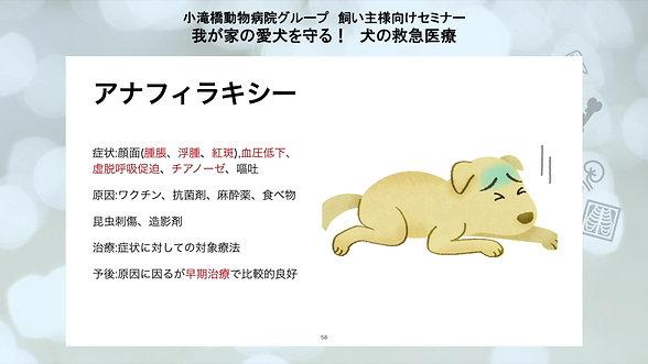 我が家の愛犬を守る!犬の救急医療セミナー part6