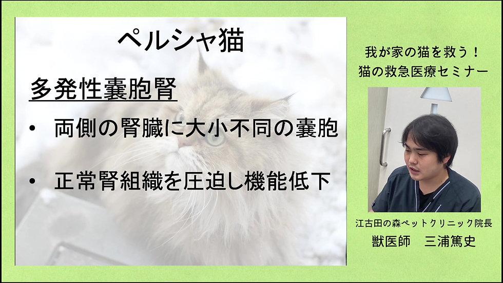 我が家の愛猫を救う! 猫の救急医療セミナー part2