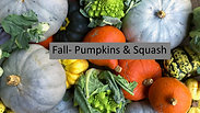 Fall- Pumpkins & Squash
