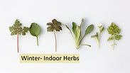 Winter- Indoor Herbs