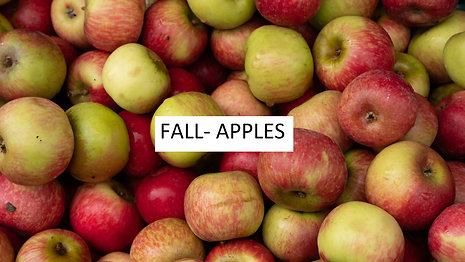 Fall- Apples