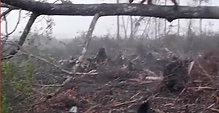 Déforestation, on continue ?