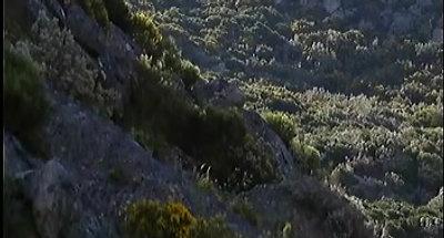 SIC-Vida Selvagem (Altitude)
