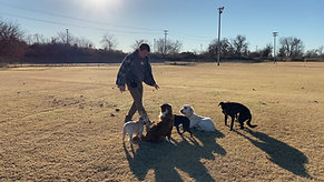Board and Training Tulsa Group Recalls Off Leash