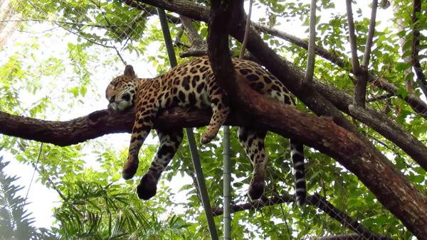 Santuario Las Pumas - Especies